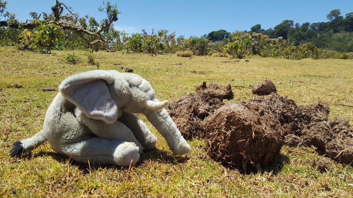 archie-the-elephant-and-poo