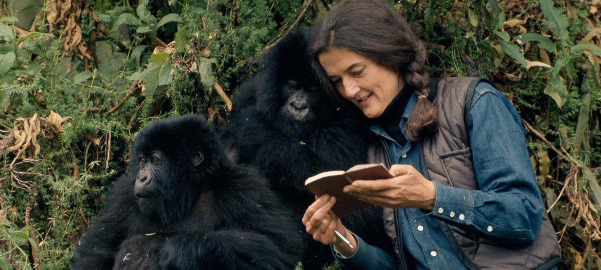dian-fossey-and-gorillas