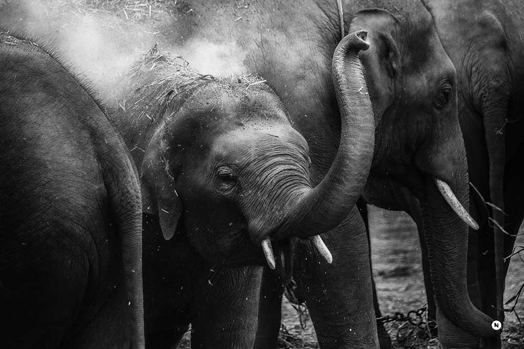 elephant-are-beautiful