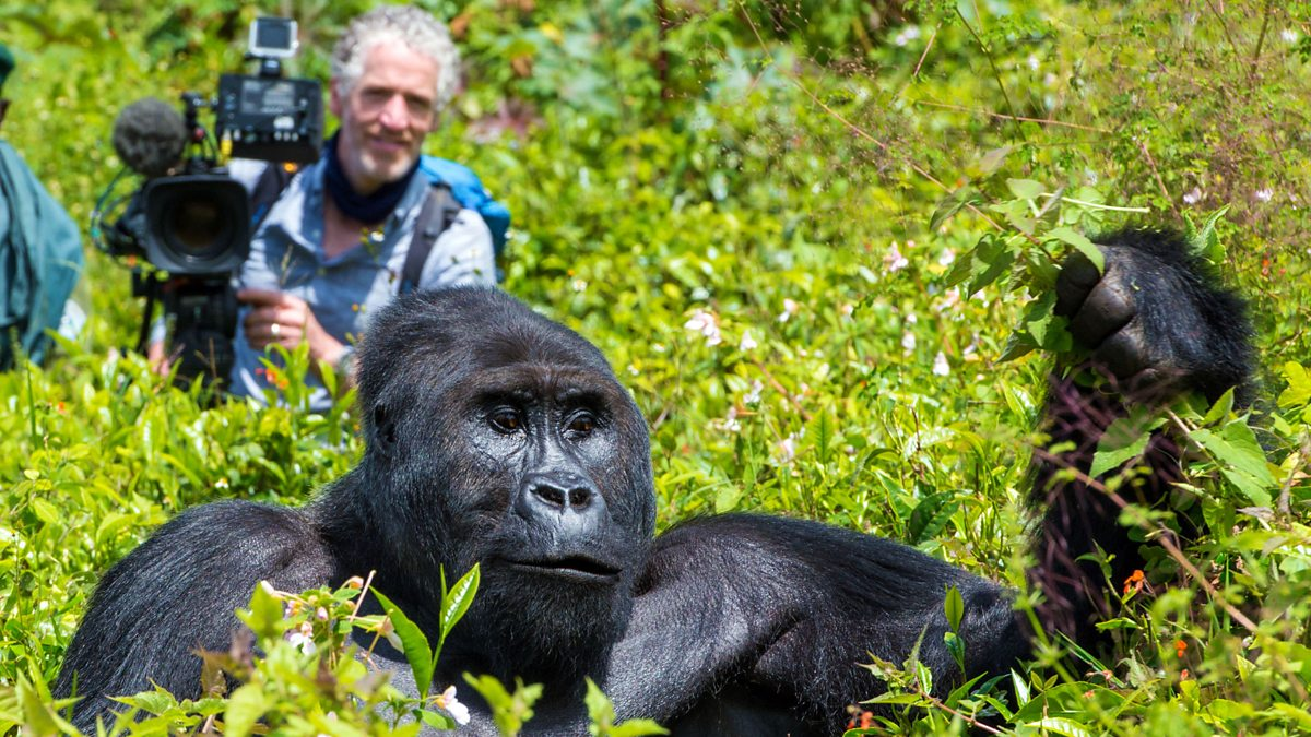 gordon-buchanan-gorilla-family-and-me